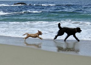 Top dog resorts in India, for your baby pooch!