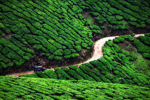 Kerala Most Charming Hill Destinations
