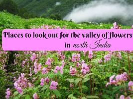 Places to look out for the valley of flowers in North India