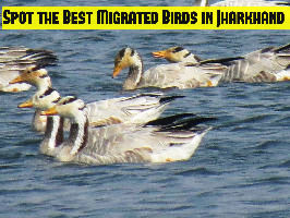 Spot the Best Migrated Birds in Jharkhand