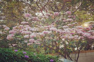 5 Unique Trees that Make Bangalore India's Garden City