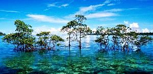 Free From Restrictions 29 Islands In Andaman And Nicobar