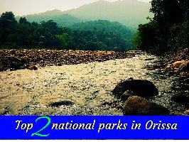 Top 2 national parks in Orissa