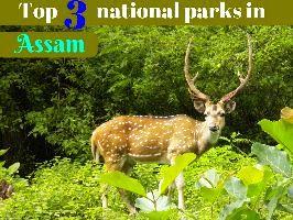 Top 3 national parks in Assam