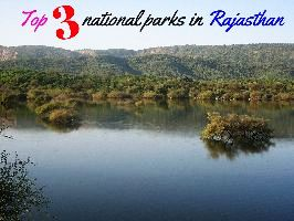 Top 3 national parks in Rajasthan