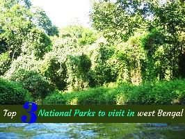 Top 3 National Parks to visit in West Bengal