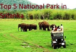 Top 5 National Park in Srilanka