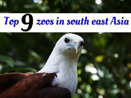 Top 9 zoos in south east Asia