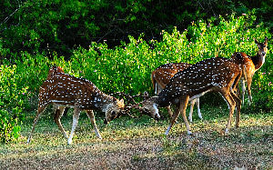Places To Enjoy Wildlife Safari In India