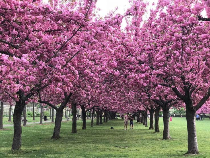 9 Beautiful Botanical Gardens Around The World