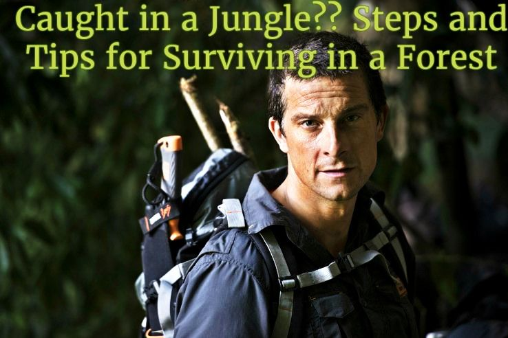 Caught in a Jungle?? Tips and Steps to Survive in a Forest