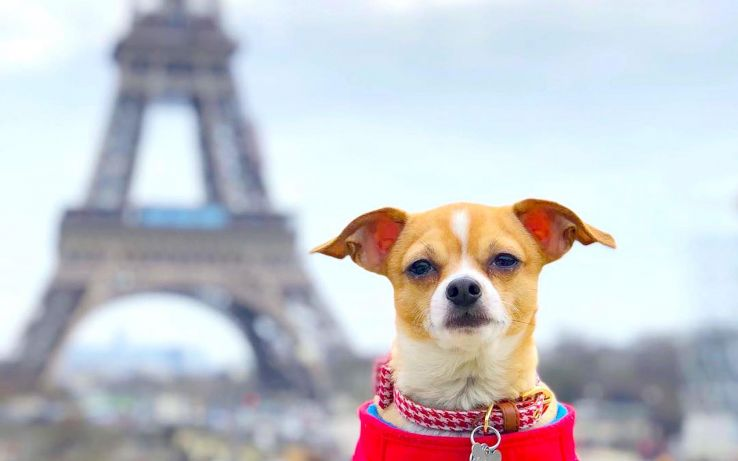 Dogs of Instagram that are travelling the world