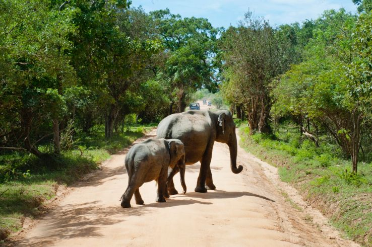 Volunteer at Thailand's Elephant Nature Park and make a difference