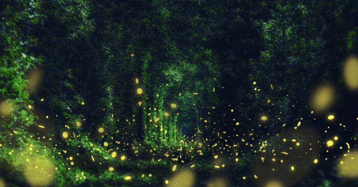There is a glowing forest near Goa which you missed because you were partying too hard