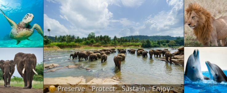 Global Wildlife Index has ranked USA as the Best Wildlife Travel destination