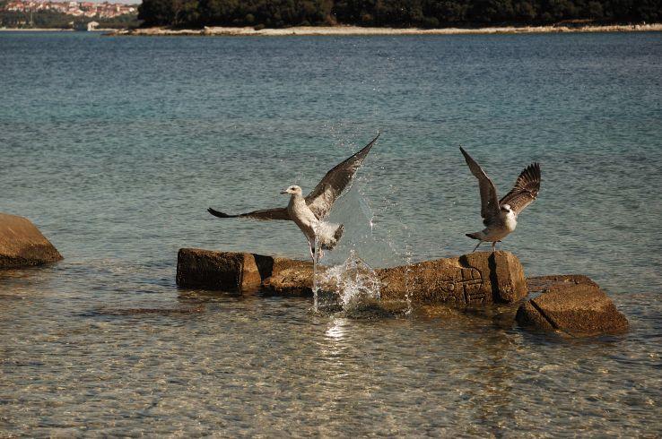 Wildlife Destinations In Croatia