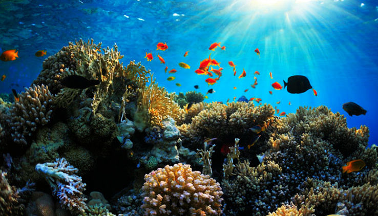 Coral Reefs in India