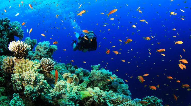 Indian Sea Diving Destinations to Explore Amazing Marine Life