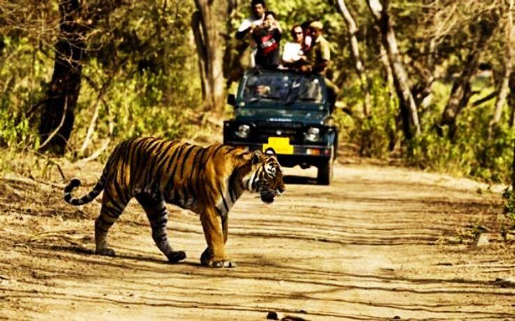 50-jeep-safari-jim-corbett-national-park_1426265799u50.jpg