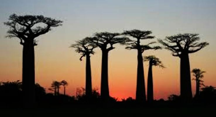 Planned A Madagascar Honeymoon Here Are Some Places That You Must Visit