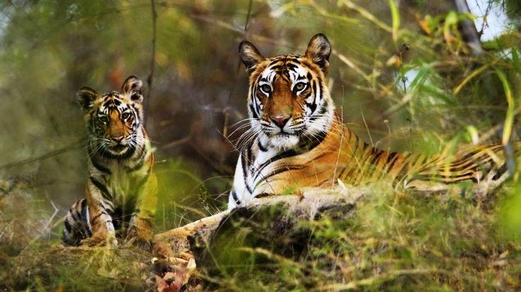 Bandhavgarh-National-Park_1429792902u140.jpg