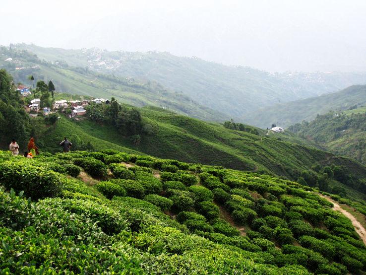 Darjeeling_1469612864u60.jpg