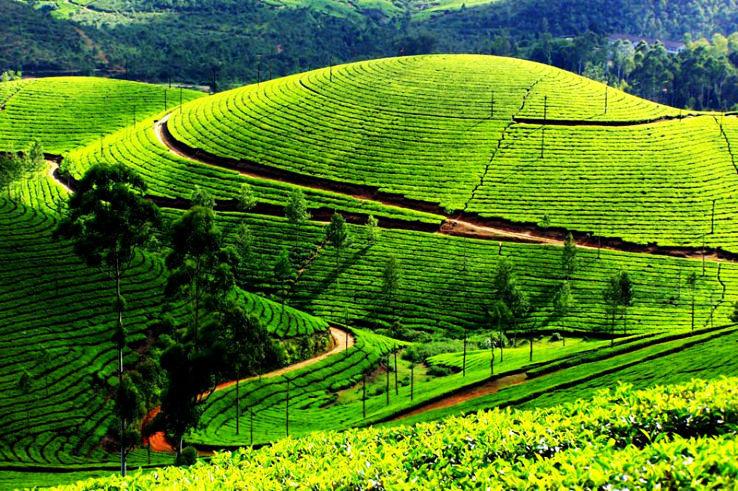 Darjeeling_1_1426665822e11.jpg