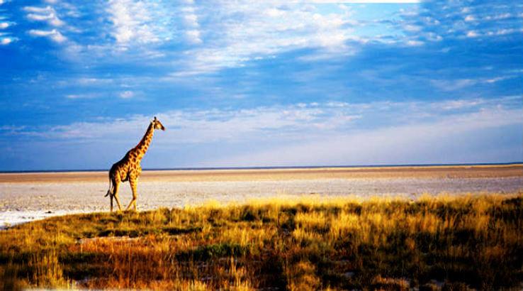 Etosha-National-Park_1425722797i60.jpg