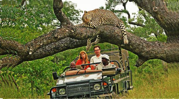 Kruger-National-Park_1425722797i40.jpg