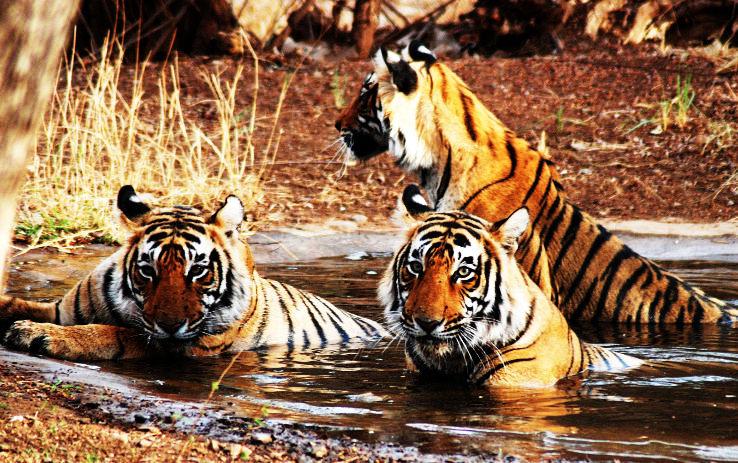 Ranthambore-National-Park_1450247657i90.jpg
