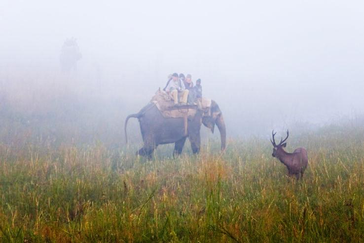 Sambar_Deer_in_Jim_Corbet_National_Park_1426325217u100.jpg