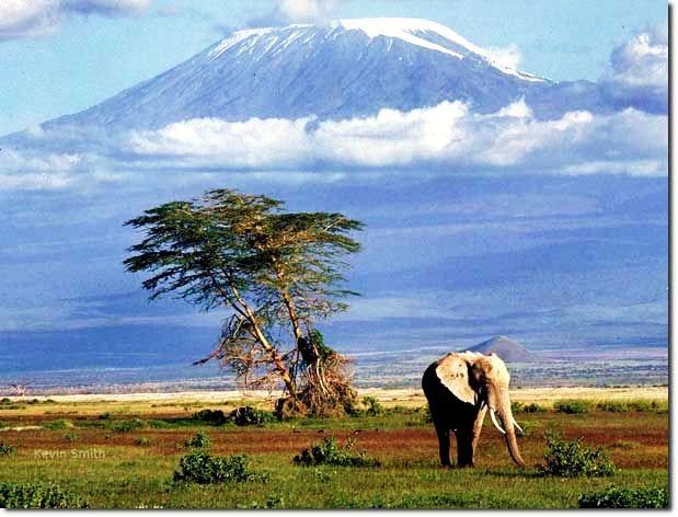Tanzania_Safari_Of_Tanzania.jpg