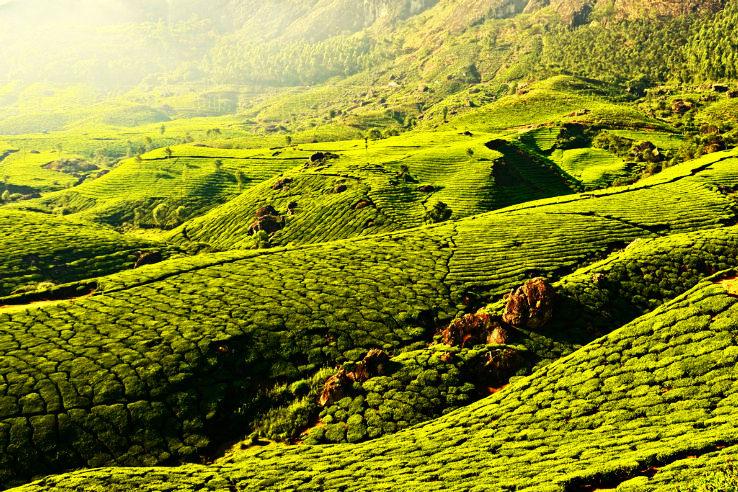 Best Travel Agents in Kerala