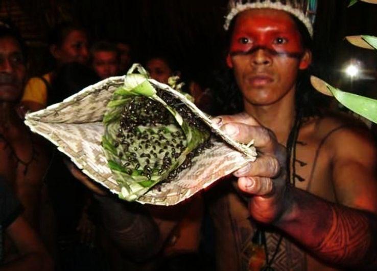bullet-ants-ritual-brazil-amazon_1425475139i30.jpg