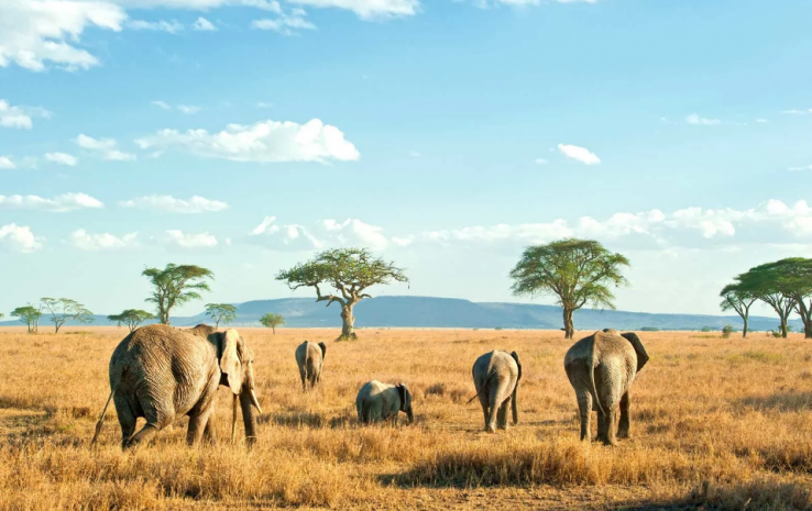 The 7 Best Safaris across the World for Family