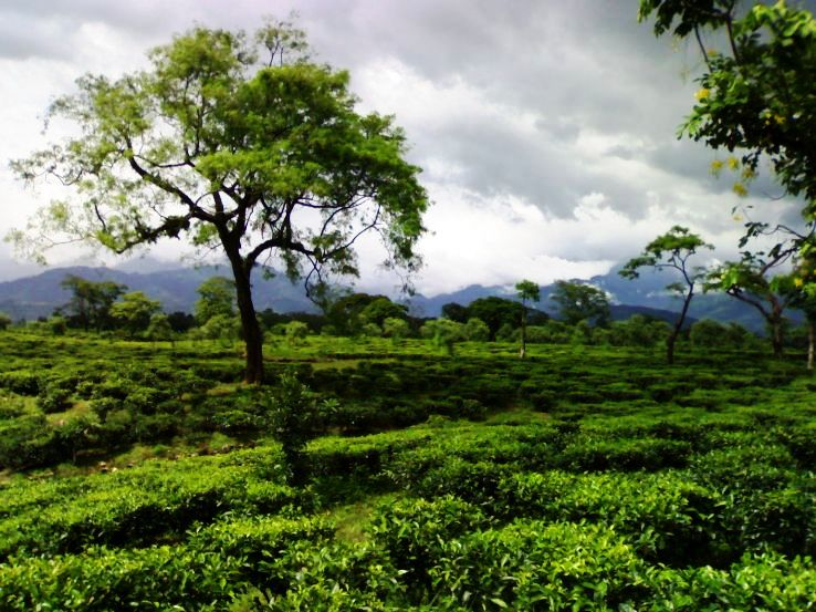 Top 3 hill stations in West Bengal