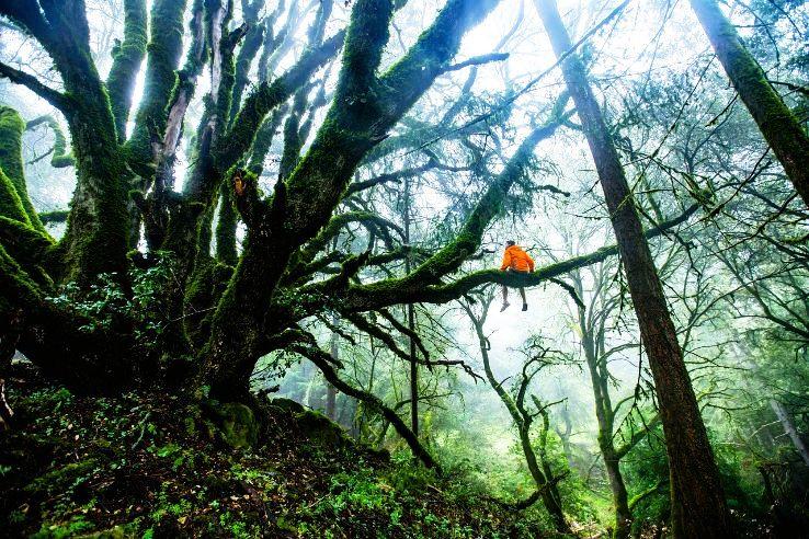 forest-1245692_1280_1478423323e11.jpg
