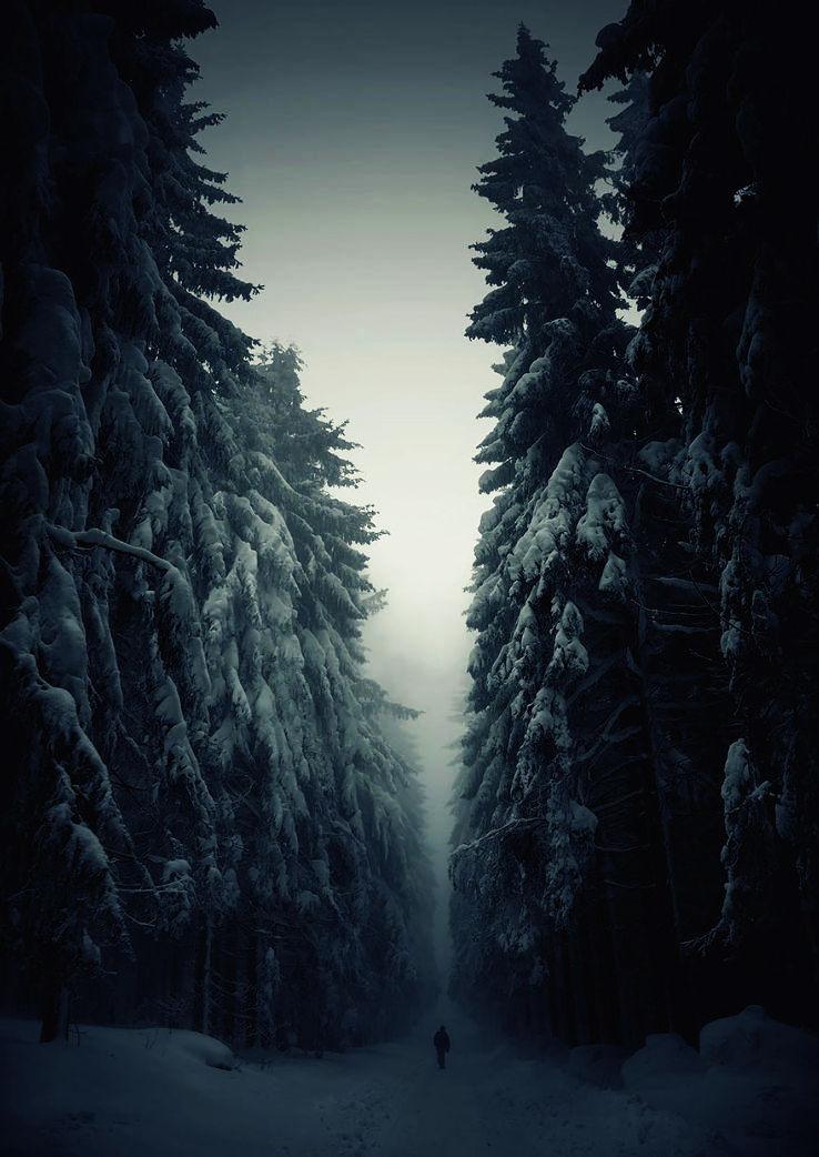 forest_1429793567u140.jpg