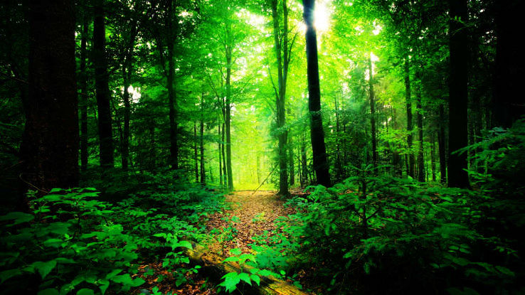 List of Forests In India