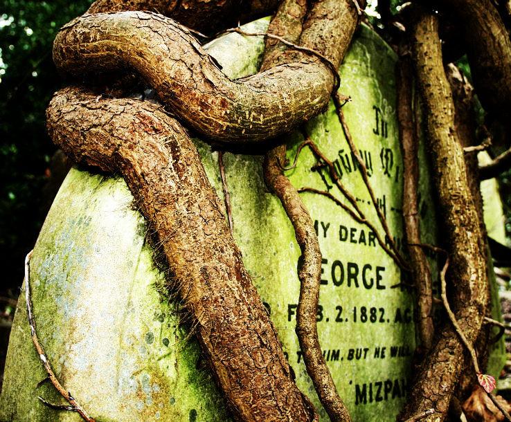 highgate_cemetery3_1444116499u23.jpg