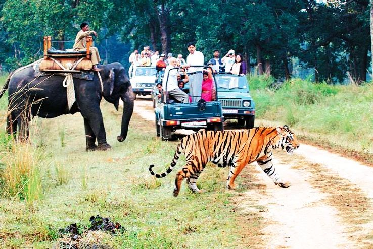 problems of wildlife tourism in india From jim corbett to kaziranga to gir forest, india is home to some of the best national parks - 10 national parks and wildlife sanctuaries that every wildlife photography enthusiast must visit.