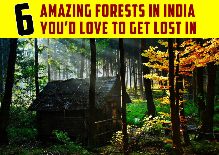6 Amazing Forests in India you had Love to Get Lost In