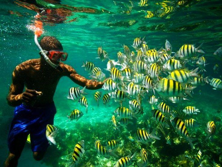 jamaica-fish-snorkel_1426525503u90.jpg