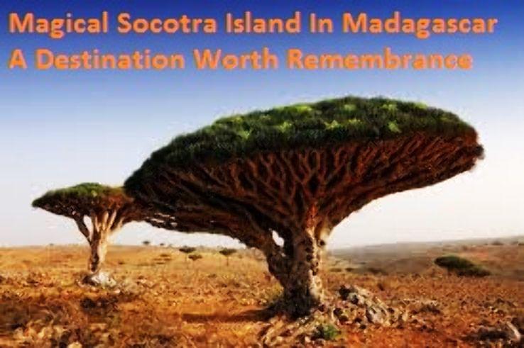 Magical Socotra Island In Madagascar A Destination Worth Remembrance
