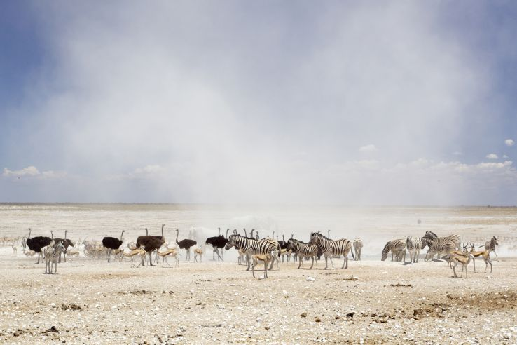National Parks In Africa For Your Wild Holiday
