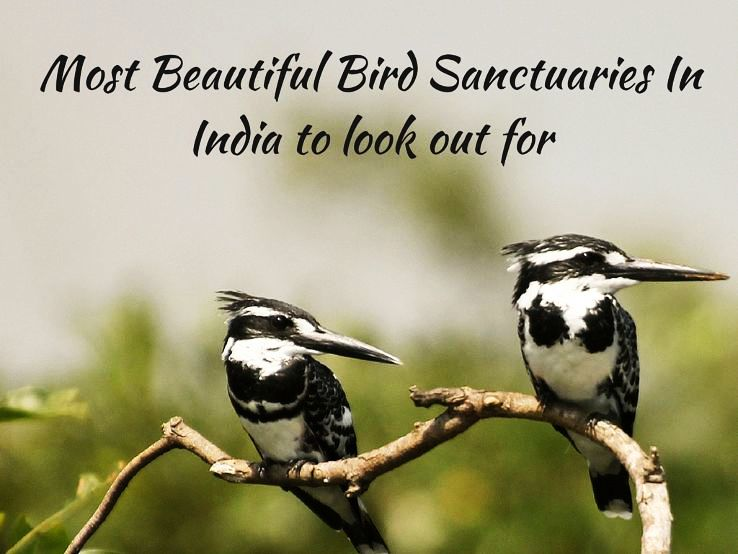 Most Beautiful Bird Sanctuaries In India to look out for