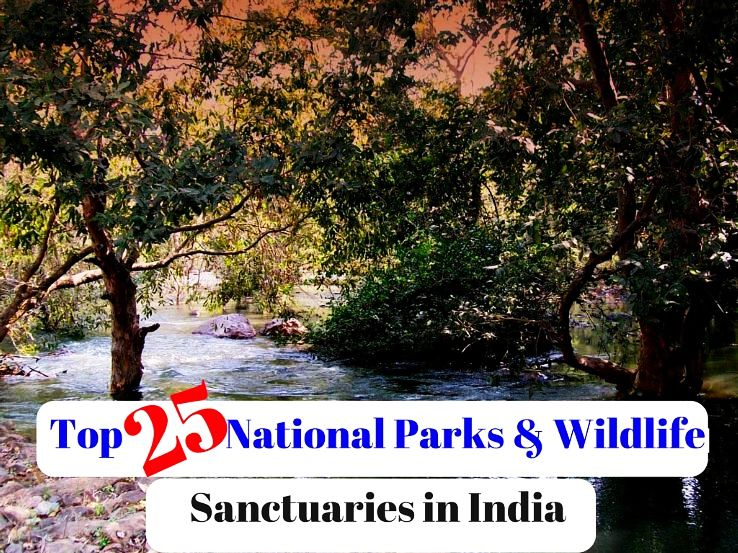 Top 25 National Parks & Wildlife Sanctuaries in India