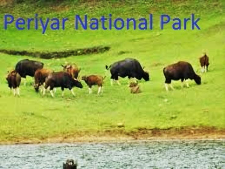 Periyar National Park