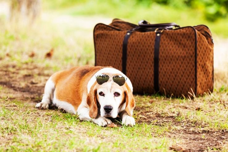 Pet care tips for your next travel