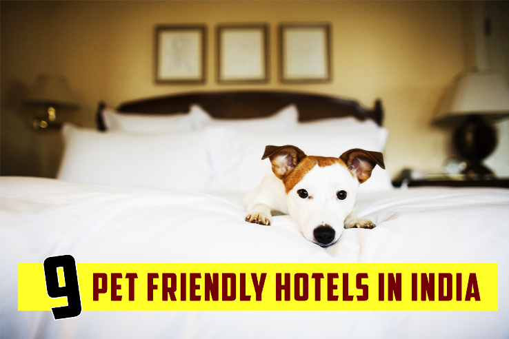 9 Pet Friendly Hotels in India